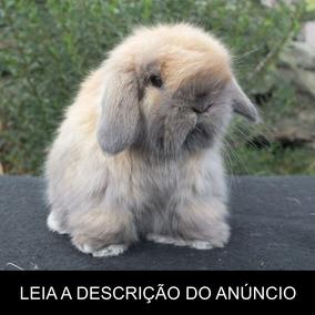 Mini Coelho - Tudo Sobre A Criação (frete Gratis) Promoção!
