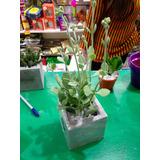 Cactus Con Flores De Colores Moron Centro Envios Julypetsjul