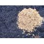 Casca De Arroz Carbonizada - Subs Para Planta Pitaya - 10 Kg