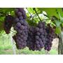 Fertilizante Líquido Para Solo Npk 10-10-10 Com 20 L