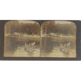 Estereoscopia The Perfect Stereograph (trade Mark) 1903 Rar