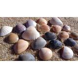 Conchas Do Mar De Búzios (lote Com 100 Unidades)