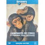 Dvd Discovery Chimpanzes Do Congo A Caminho - Lacra- 1t