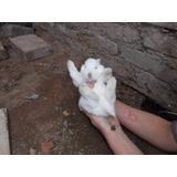 Venta De Conejos!!!!!!!!!!!!!!!!! 450 Pesos