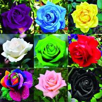 50 Sementes De Rosas Mix Roxa Amarela Azul Rosa E Outras