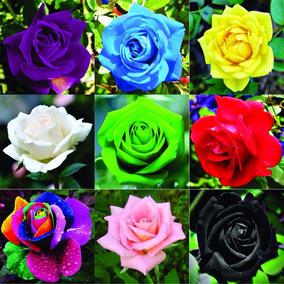 150 Sementes De Rosas Mix Roxa Amarela Azul Rosa E Outras