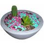 Maceta Fibrocemento + 2 Plantas Cactus Suculenta Decoracion
