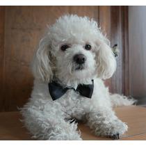 10 Collar Moño Listón Para Cuello Mascotas Perros Y Gatos