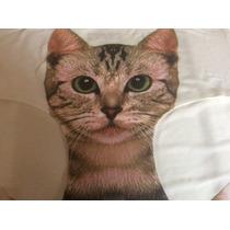 Calzones Pantaletas Moda Asiática Gato