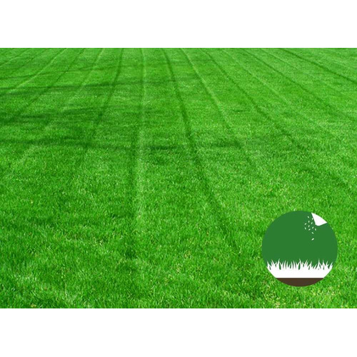 Semillas Césped Rye Grass Anual - Ideal Para Jardín Parques