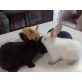 ¡¡¡¡conejos Grandes Y Chicos Californianos Y Neozelandés!!!