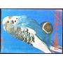 Libro Cotorritas Australianas - C. S. Andrade - Ed. Albatros