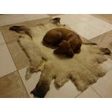 Cuero Oveja Cordero Blanco Para Cucha Cama Perro Mascota