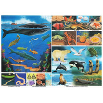 Pack De 256 Monografias Escolares Digitales Envio Gratis