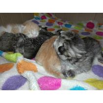 Gato Gatitos Gato En Adopción