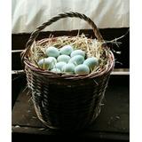 Huevos Azules Fertiles De Colloncas