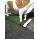 Cesped Sintetico Base Vaca Publicidad De Carniceria