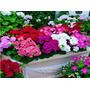 20 Sementes Flor Amarela Vermelha Bonsai Flor Plantas