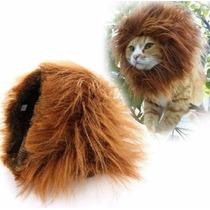 Juba De Leão Pequena Para Gatos Cães Cachorros Pequeno Porte