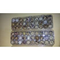 Embalagem Para 30 Ovos De Codorna - Caixa Com 100un