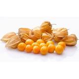 Fruta Deshidratada Aguaymanto, Manzana, Mango, Platano Y Piñ