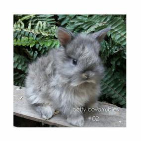 Hermosos Jersey Wooly! ( Granja De Conejos Enanitos)