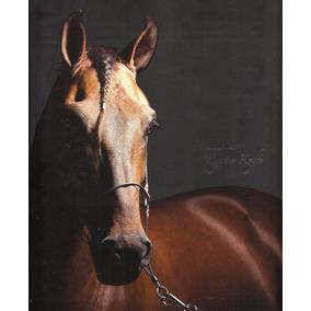Catálogo Leilão Cavalos Haras Mzc 55 Págs + 110 Fotos Luxo