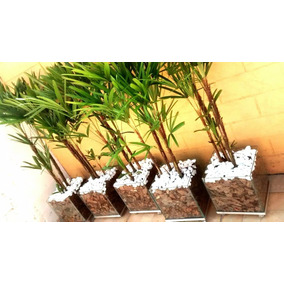Palmeira Ráfia Vaso De Vidro 30x30cm Promoção Especial