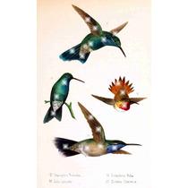 Lienzo Tela Aves De México Colibries 5 1875 80 X 50 Cm Arte