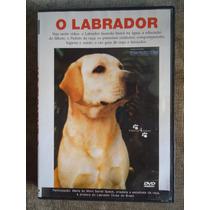 Labrador - Dvd - Sôbre A Raça - 60 Min. - Idioma Portugues