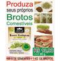 Sementes De Alfafa Orgânicas P/ Brotos Comestíveis 500 G