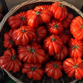Jitomate Costilludo -heirloom 20 Semillas Tomate