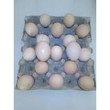 Granja Avicamp Huevos Doble Yema Frescos Pedidos Cajon 650