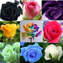 45 Sementes De Rosa Exóticas Mto Raras Arco-íris Negra Verde