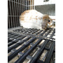 Descansa Patas Para Conejos Evita Que Tu Conejo Se Lastime