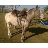 Caballo De Andar - Muy Manso