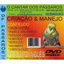 Dvd Piriquito Ingles Criação E Manejo