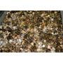 100 Huevos Codorniz Jumbo Japonica Fertl Org@nico Fresco Wii