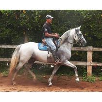 Garanhão Mangalarga Marchador Campeão De Pista - Quartel Jb
