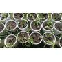 Souvenirs Suculentas Y Cactus 1 Variedad En Cada Macetita