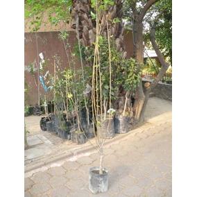 Frutales.peras:variedades Bosc, Barlett Y Pera De Agua