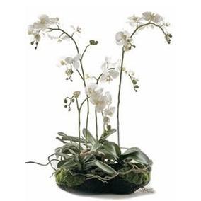 Arreglo De Orquídea Naturales Regalo Para Toda Ocasión