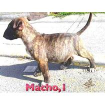 Cachorros De 2 Meses Y Medio Opcion A Pedigree ,