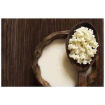 Kefir Bactéria Iogurte Natural Lactobacilo Vivo Frete Grátis