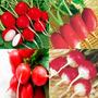 4 Variedades Sementes De Rabanete P/ Horta Mudas Vaso Campo