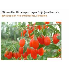1000 Goji Semillas Himalayan Goji (wolfberry ) Bayas