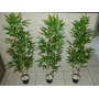 Planta Artificial, Bambu Reto Aurea 100cm,decoração E Beleza