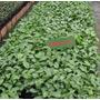 Vendemos Plantas Frutal/forestal/ornamental/medicinal Asesor