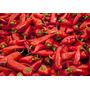 300 Sementes Pimenta Malaguenta Super Promoção
