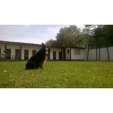 Pensionado Y Guardería Canina Baños. Peluquería Petdog Pilar
